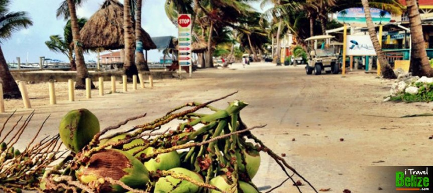Problems of Living in Belize – Coconut Roadblock