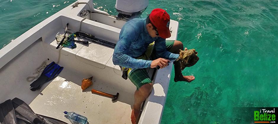 Conch fishing in san pedro ambergris caye for Fishing san pedro belize