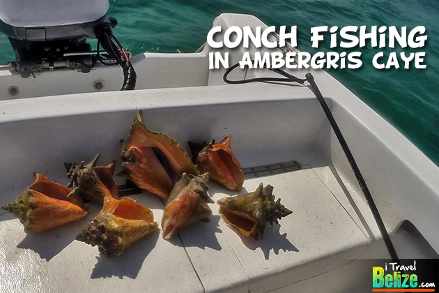 Conch Fishing in San Pedro, Ambergris Caye