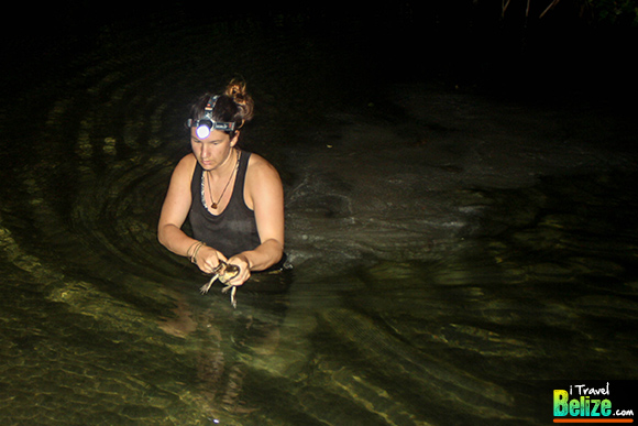 Wild Crocodile Encounters at Ambergris Caye's Newest Tour
