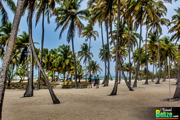 Boobies and Paradise – Escape to Half Moon Caye Belize
