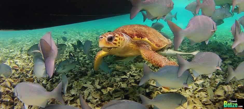 Marvel at the Underwater Beauty of Hol Chan Marine Reserve