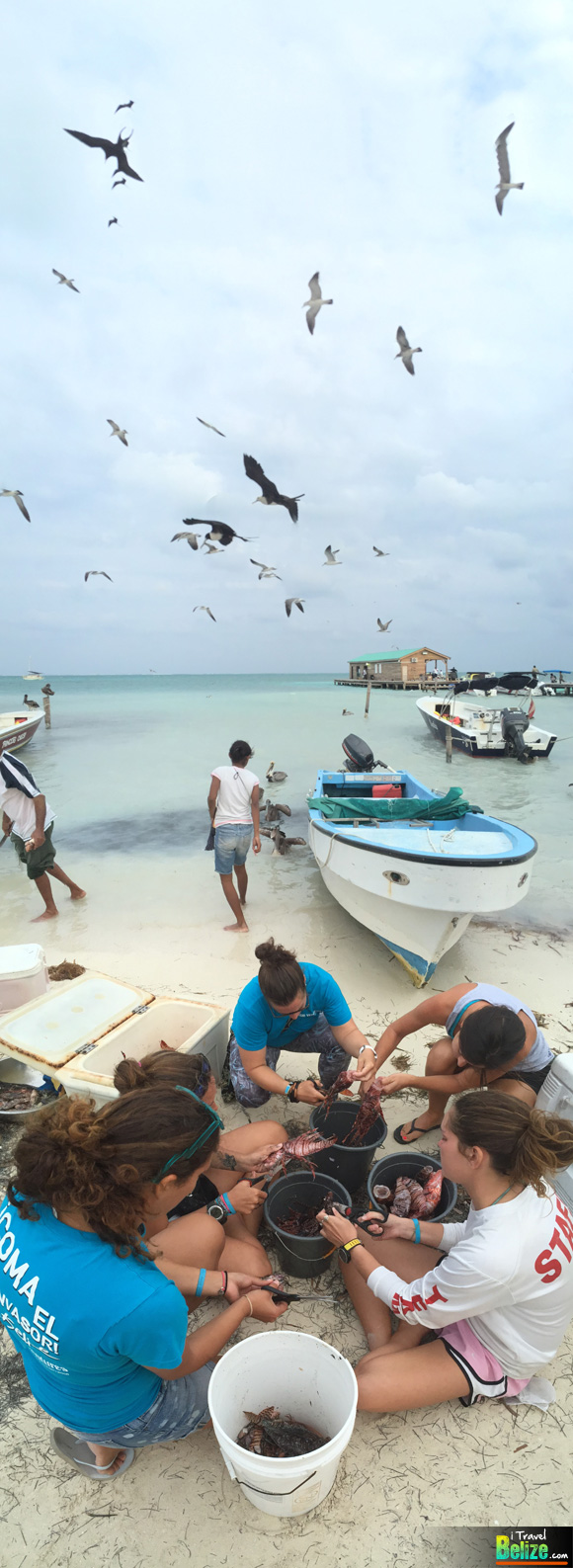 Spear Into Action at Belize's Annual Lionfish Derby