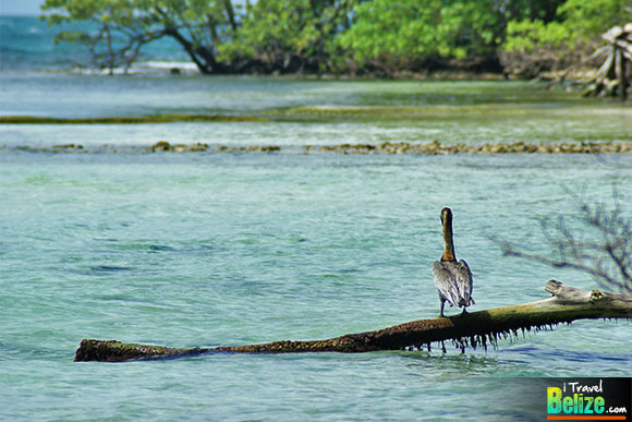 The Beauty of the Snake Cayes of Southern Belize