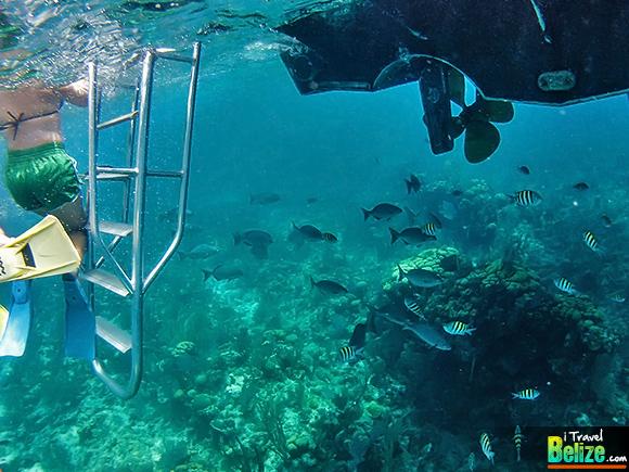 Plunge into the Aquarium at Long Caye, Belize