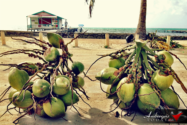 Problems of Living in Belize – Coconut Roadblock
