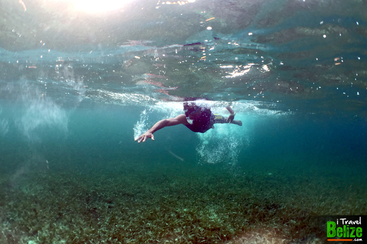 swim-reef-awareness-16