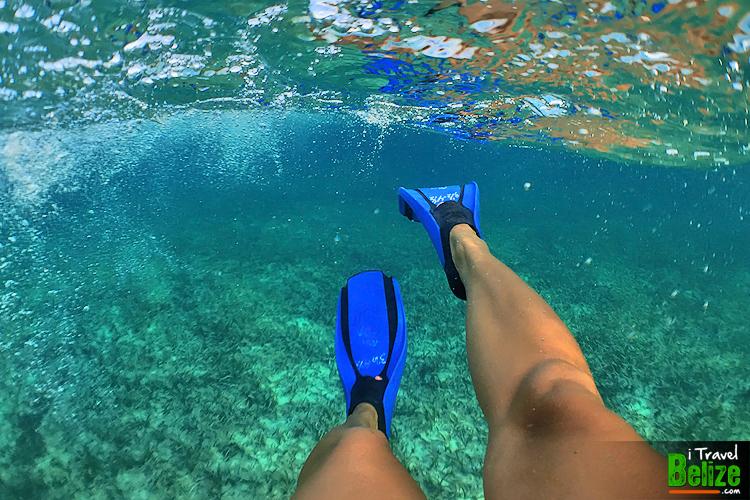 swim-reef-awareness-21