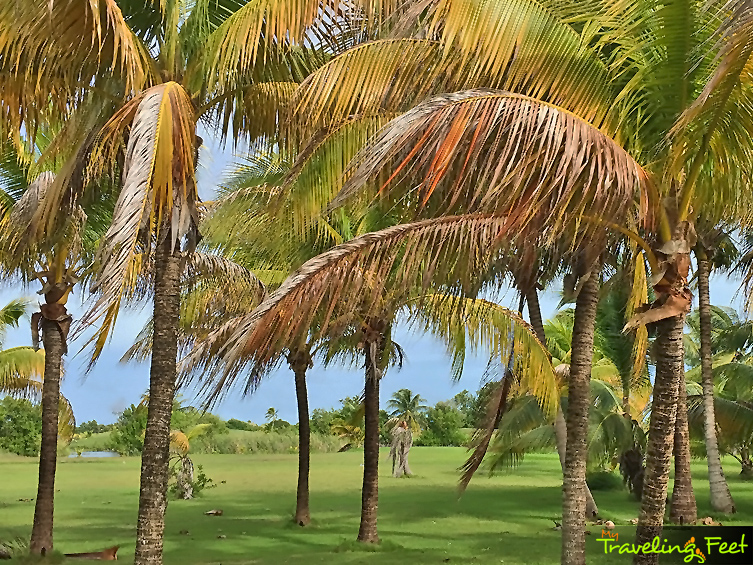 traveling-feet-caye-chapel-golf-04