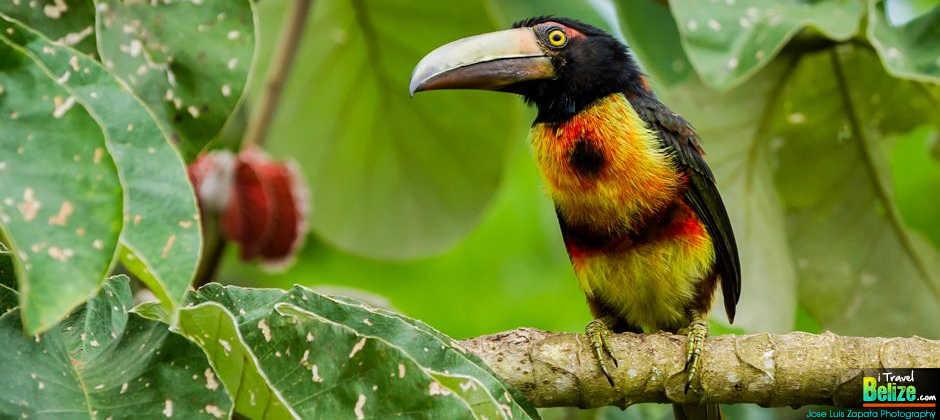 Travel Belize Corozal Invest