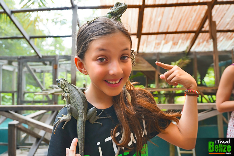 Green Iguana Conservation Project in Belize
