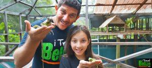 Green Iguana Conservation