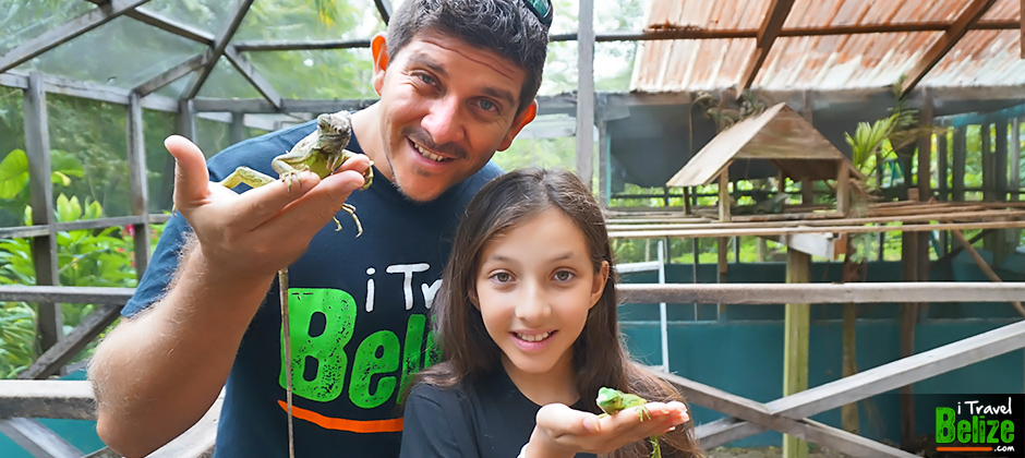 Green Iguana Conservation