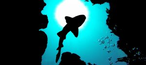 Premier Divers Boutique Diving Belize
